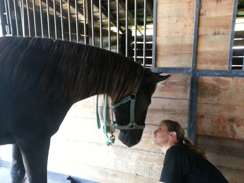 The equine veterinarian practices bedside manner