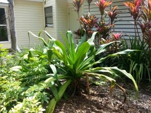 a huge plant finds its favorite spot