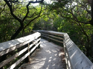 bridges take the trail through the mangroves