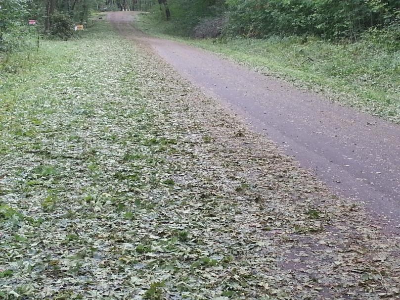 Chopped leaf salad covers  many roads