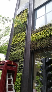 The street front wall of greenery at Digby's.  Awesome place. Eat there.