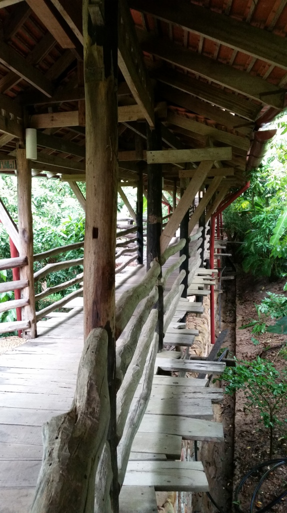 An elevated walkway through the jungle