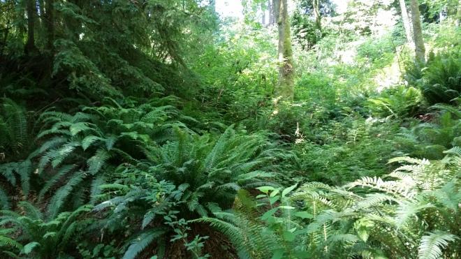 Beautiful greenness everywhereee
