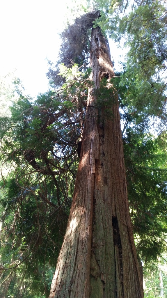Old growth of several different kinds of trees can be seen...