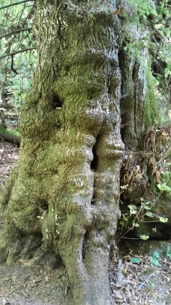 A hobitt tree