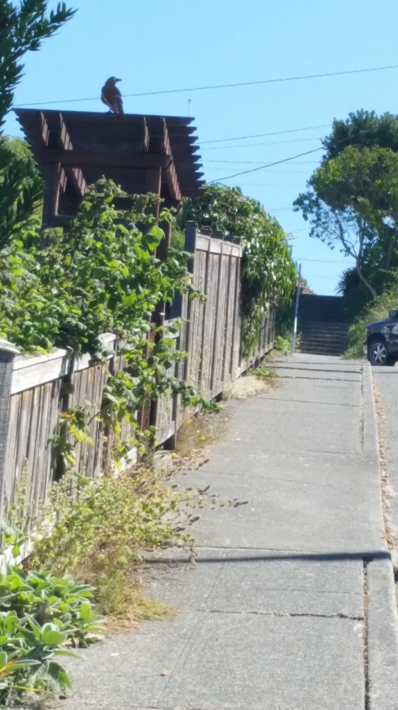 SW Stevens St. with a staircase at the end...